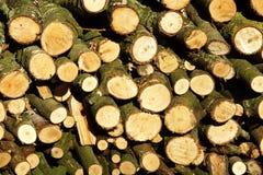 Catasta di legna Fotografia Stock