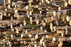 Catasta di legna in sole Fotografie Stock