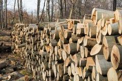 Catasta di legna in una foresta europea Immagine Stock Libera da Diritti