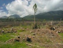 Catastrofe ecologica Fotografia Stock
