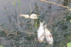 Catastrofe ecologica Fotografie Stock Libere da Diritti