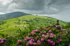 Catawba Rhododendron in Front of Round Bald Royalty Free Stock Photography