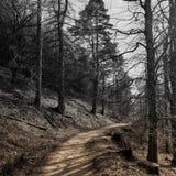 Catbells path 2 tone
