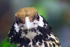catbird стоковая фотография