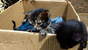 Catbox Zdjęcia Stock