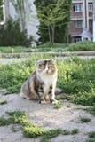 Catcat zwierzęcia domowego natury słodki świat Zdjęcie Stock