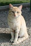 Catcat zwierzęcia domowego natury słodki świat Zdjęcie Royalty Free