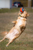 Catch ball Stock Photos