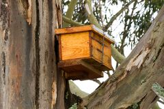 Free Catch Bee Hive In Tree Near George South Africa Stock Image - 186463091