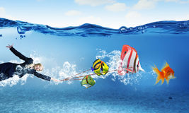 Catch big fish Royalty Free Stock Images