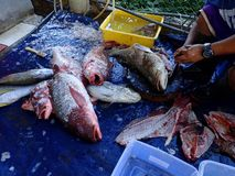Catch of the day and cleaned and fresh fishes ready to cook. royalty free stock image