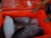Catch of the day and cleaned and fresh fishes ready to cook. royalty free stock images