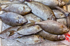 Fresh Fish at Local Asian Market Royalty Free Stock Images