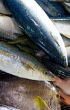 Fresh fish on a market stall royalty free stock photos