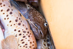 Catch of the day - Fresh Fish in Shipping Container Royalty Free Stock Images