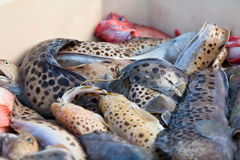 Catch of the day - Fresh Fish in Shipping Container Royalty Free Stock Photo