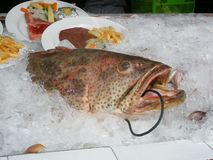 Catch of the Day. Fresh fish on tonights menu Royalty Free Stock Photography