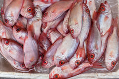 Fresh Fish at Local Market Royalty Free Stock Images