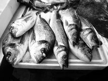 Catch of the day St. Georges Market Belfast. Royalty Free Stock Image