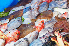 Catch of the day on a traditional Moroccan market (souk) in Essaouira, Morocco Royalty Free Stock Photography