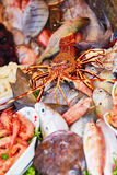 Catch of the day on a traditional Moroccan market (souk) in Essaouira, Morocco Stock Photo