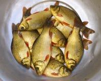 Catch Fish Stock Photos