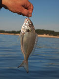 Catch fish Royalty Free Stock Images