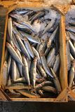 Catch of Fish. Fresh Sprat Catch of Fish at Market royalty free stock photos
