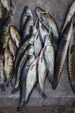 Catch fish in market, close up Stock Image