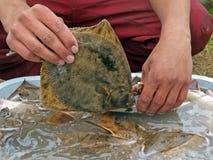 Catch flatfishes 2. Fisherman washing catch flatfishes, view close up Royalty Free Stock Photos