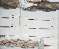 Catch of fresh fish in white plastic boxes. Catch of fresh fish in white plastic boxer stock image
