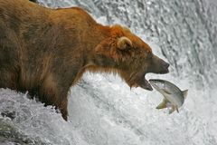 Free Catch Of The Day Stock Photography - 6164222