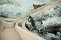 Free Catch Of The Day - Fresh Fish In Shipping Containers Royalty Free Stock Photos - 34951428