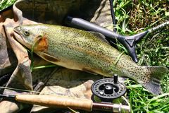 The catch rainbow trout. Rainbow Trout and Fishing Rod stock photo