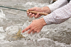 Catch and release: fishes tail. Catch and release. Releasing a fish back into the stream Stock Photos