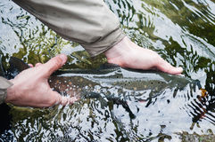 Catch and release: fishes tail Royalty Free Stock Images
