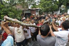 Catch snakes Stock Photo