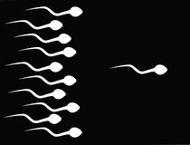 The catch sperm Stock Image