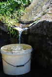 Catch water from natural spring Stock Image