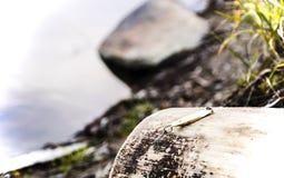Catchability-Köder Stockfotografie