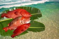 catched fish fresh red snapper Royaltyfri Foto