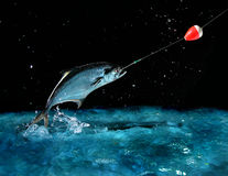 Free Catching A Big Fish At Night Stock Photo - 1559630