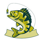 Catching Bass fish. Fish color. Vector fish. Graphic fish. Fish on a white background. Fish on a light background. Bassfish. Fisherman. Fishing. Recreation Stock Photography