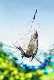 Catching a big fish with a fishing pole Royalty Free Stock Photography