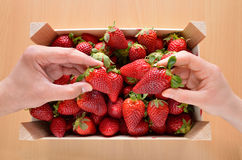 Catching a box strawberries. Hands of people catching a box strawberries Stock Photography