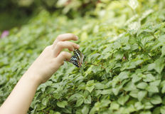 Catching Butterflies Stock Images