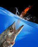 Catching Fish. Stock Image