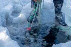 Catching fish with fishing net outdoor activities in winter time. Catching fish with fishing net outdoor activities in winter time royalty free stock photos