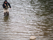 Catching the fish. Man caught the fish in colorado flyfishing Stock Photos
