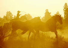 Catching the Herd. Cowboy and horses in the sunset rounding up the herd Royalty Free Stock Images